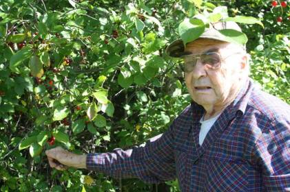My grandfather picking choke cherries